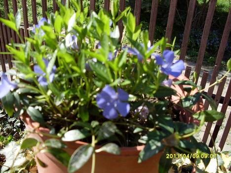 Virágaink 030
