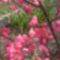 Virágaim  képekben 18