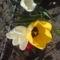 Virágaim  képekben 3