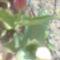 Virágaim  képekben 4