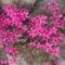 Virágaim  képekben 8