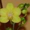 Orchideám közelebbről