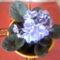 fokfoldi_ibolya-004_833305_80885