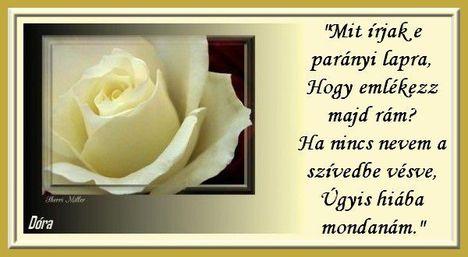 idézet fehér rózsával
