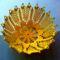 sárga kosárka1