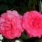 Szépséges virágaim egy része 10