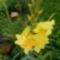 Szépséges virágaim egy része 2