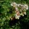 Szépséges virágaim egy része 3