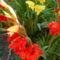 Szépséges virágaim egy része 5