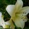Szépséges virágaim egy része 9