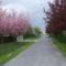 kis falum szép utcája