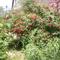 kertem virágzásban