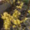 Tavaszi virágaim. 10