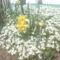 Tavaszi virágaim. 5