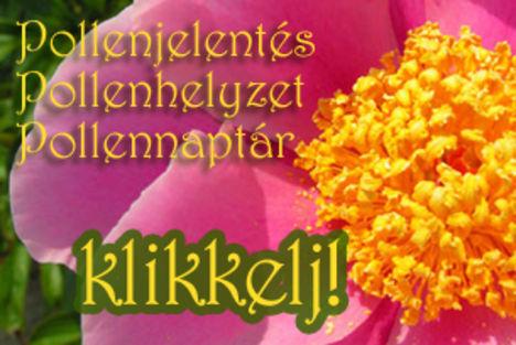 pollenjelentes