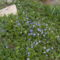 2011 kert Április 033