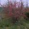 2011 kert Április 047