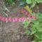 Szív virág rózsa színben