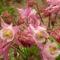 virág 2011ápr29 033