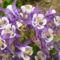 virág 2011ápr29 040
