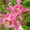 virág 2011ápr29 041