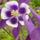 virág 2011ápr29 042