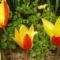 virág 2011ápr29 054