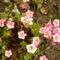 virág 2011ápr 008