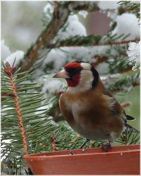 téli madarak 11 Madárvilág_Várda_2009_ január-82