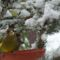 téli madarak 5 Madárvilág_Várda_2009_ január-47