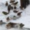 téli madarak 6 Madárvilág_Várda_2009_ január-56