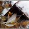 téli madarak 7 Madárvilág_Várda_2009_ január-62