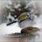 téli madarak 8 Madárvilág_Várda_2009_ január-66