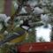 téli madarak 9 Madárvilág_Várda_2009_ január-70