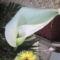 fia Erik ballagási virágai 12