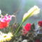 fia Erik ballagási virágai 13