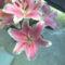fia Erik ballagási virágai 17