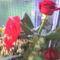fia Erik ballagási virágai 19