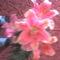 fia Erik ballagási virágai 1