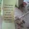 fia Erik ballagási virágai 20
