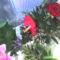 fia Erik ballagási virágai 23
