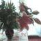 fia Erik ballagási virágai 39