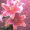 fia Erik ballagási virágai 47