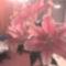 fia Erik ballagási virágai 56
