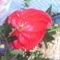 fia Erik ballagási virágai 9