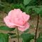 ez is első virág