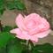 ez is első virágzás