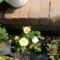 Májusi virágok 008