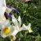 Májusi virágok 012
