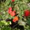Májusi virágok 019